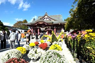 画像:笠間の菊(きく)まつり
