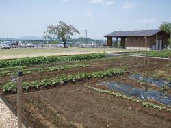 画像:市民農園(しみんのうえん)2