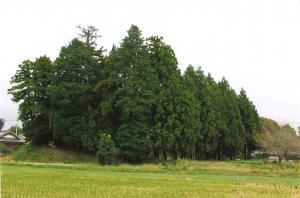 『5小原城』の画像