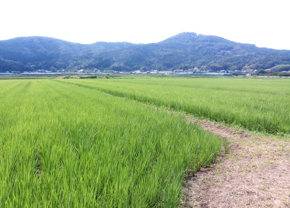 『農地のイメージ』の画像