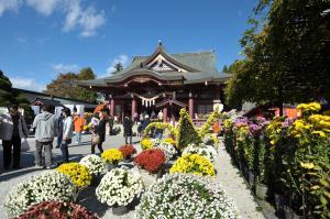 『菊まつり(稲荷神社)』の画像