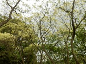 『葉を食べつくされた栗の樹』の画像