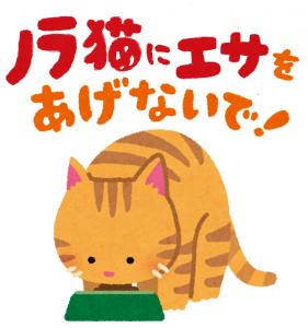 『野良猫えさ』の画像
