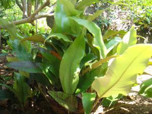 『一ツ葉』の画像