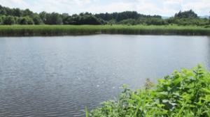 『白旗池』の画像