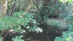『野口池』の画像