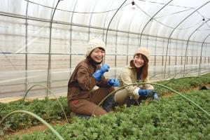 『菊農家』の画像