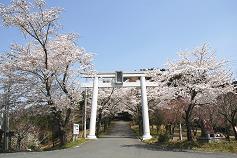 あたご山 桜まつり