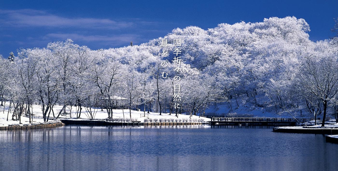 北山公園(冬)